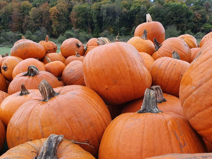 Stack of pumpkins on field