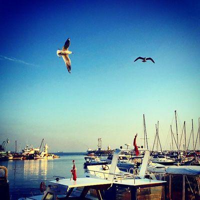 Yesilkoy Marina Istanbuldayasam Istanbul Turkey Turkishgram Beşiktaşk Instagood Instamod Aniyakala