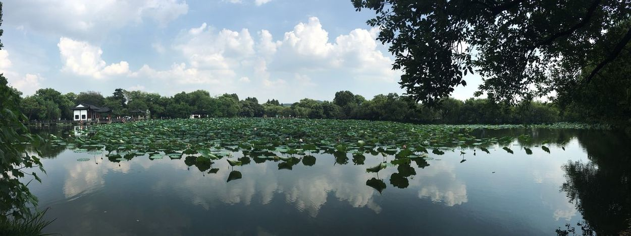 Nofilter Hangzhou 杭州 China 中国 Land Landscape Water Nature Waterplants Sky Water Reflections Beauty In Nature Peace Clous And Sky Reflection XiHu Lake No People Taking Photos Check This Out EyeEm Nature Lover Relaxing Green Perfection