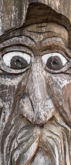 Sculpture of a senior with moustaches, engraved in the trunk of a tree. It can be used as backgrounds. Moustache Ancient Art Artist Artistic Background Brown Close-up Craft Creativity Detail Elderly Engrave Engraving Eroded Eyes Face Handicraft Handmade Man Mouth Nose Old Originality Past