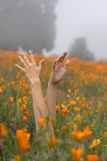 Cropped Hands Of Woman Amidst Flowering Plants
