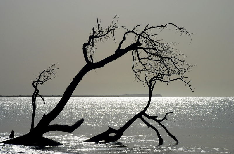 Dead tree silhouette. Cap Skirring, Senegal African Atlantic Ocean Dead Tree Silhouette Sunlight Waterscape Africa Bare Tree Beauty In Nature Branch Horizon Over Water Nature No People Outdoors Scenics Sea Senegal Tree Tree Trunk Water