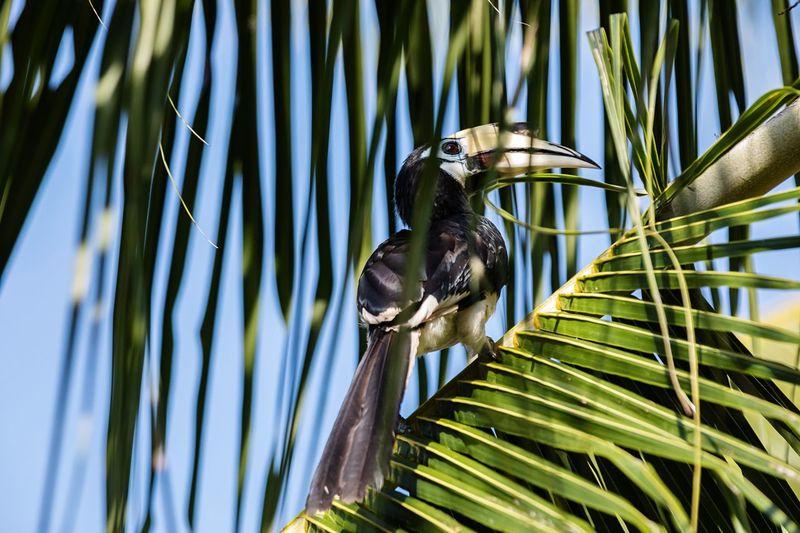 Bird perching on a branch