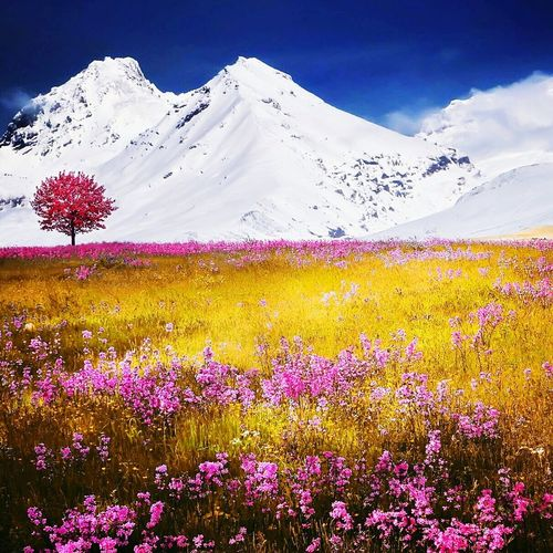 Flower Scenics Beauty In Nature Nature Landscape Sunset Rural Scene Cold Temperature Sky Outdoors No People Freshness Fragility Mountain One Person Men First Eyeem Photo Only Men One Man Only Business Finance And Industry Adult Adults Only Sunlight Flower Head Day