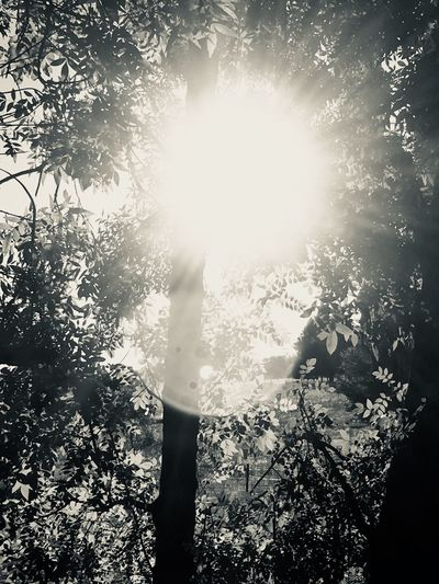 Setting sun Tree Nature Sunlight Forest One Person Growth Day Outdoors Beauty In Nature