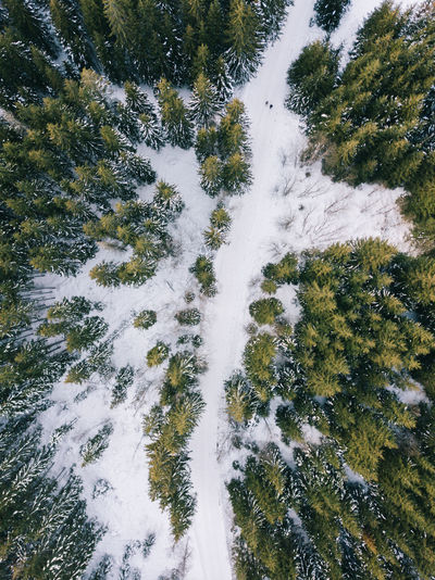 Beauty In Nature Cold Temperature Coniferous Tree Covering Day Flowing Flowing Water Forest Green Color Growth High Angle View Land Nature No People Non-urban Scene Outdoors Plant Scenics - Nature Snow Tranquil Scene Tranquility Tree Winter