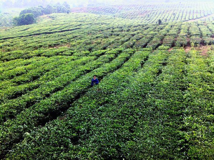 Tea Fresh Produce