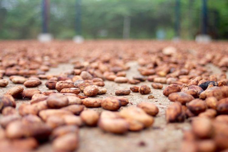 Surface level view of nuts on footpath