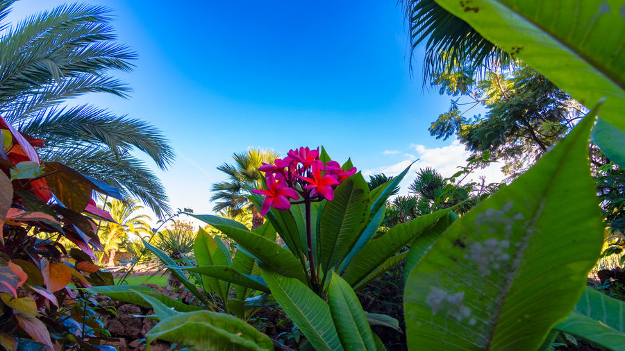 Puerto de la Cruz in the sign of plants and flowers. This week, from October 15 to 21, 2018, the town of Puerto de la Cruz, located on the north coast of Tenerife, is characterized by flowers, flowers and plants. Guided tours through gardens, lectures and botany events take place all over the city. This one-week event is about the flora of the Canary Islands, especially Tenerife. What few know: Here on the island there are almost 500 only on Tenerife occurring and unadulterated plants. Today on the second day I visited the extensive parks on the mountain Taoro. I photographed these pictures of the vegetation and the view of the city today on the 16th of October. More pictures and information will follow later this week. Tenerife Teneriffa Puerto De La Cruz Taoro Park Taoro Reportage Park Plants Flowers Garden Botany Flower Travel Travel Destinations Touristic Palms Traveling Travel Photography Touristic Destination Landscape Landscape_photography Beauty In Nature Flowering Plant Vulnerability  Growth