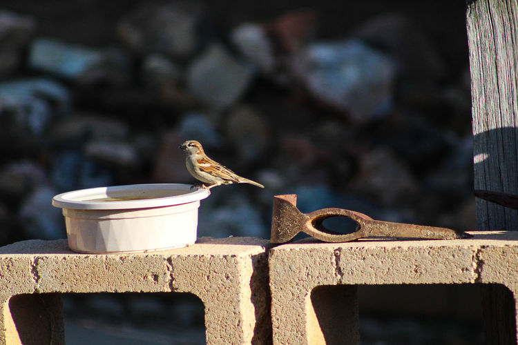 Close-up of bird perching on water bowl