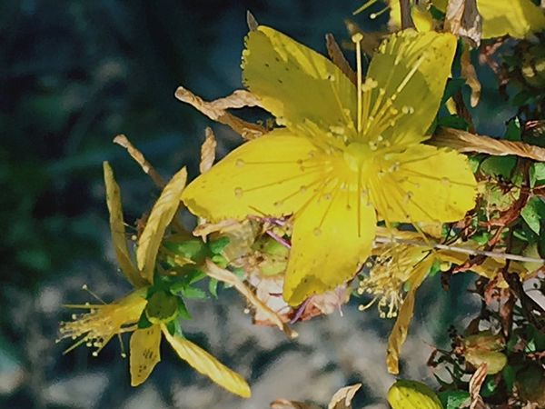 Weeds EyeEm Nature Lover