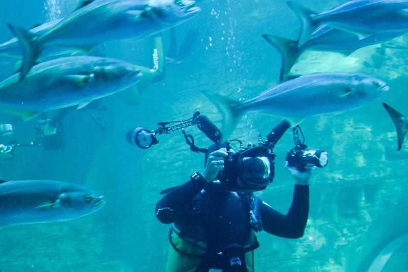 Underwater Leisure Activity Diver 2oceansaquarium Two Ocean Aquarium Cape Town Aquarium diver in Cape Town's legendary Two Oceans Aquarium