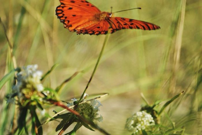 Taking Photos Nature Butterfly Summertime Beachphotography Plants Green