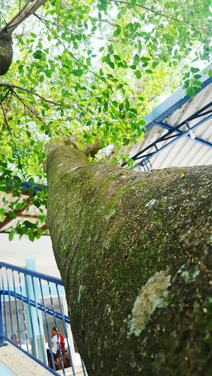 Tree Day Growth Green Color Low Angle View No People Nature Architecture Heat - Temperature Wood - Material Textured  Arts Culture And Entertainment Black Color Illuminated Brown The City Light Tree Greenhouse Water Nature Plant Wood Grain