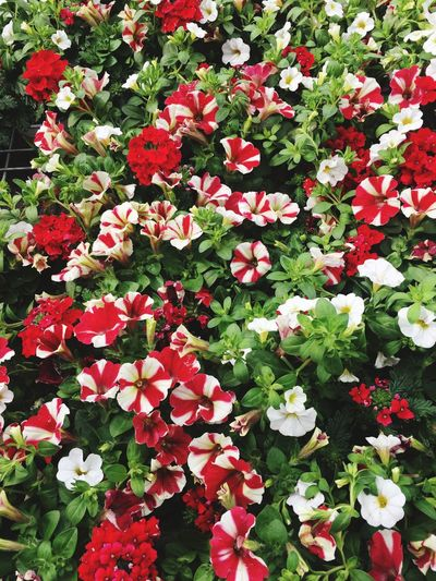Flowering Plant Flower Beauty In Nature Plant Freshness Vulnerability  Growth Flower Head Nature