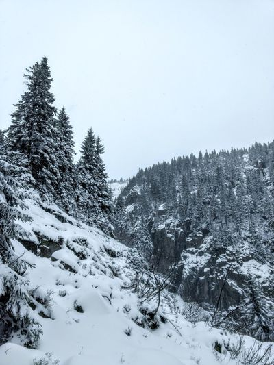 Snow Winter Cold Temperature Mountain Pine Tree Tree Forest No People Outdoors Snowing Tranquil Scene Beauty In Nature Nature Winter Mountain View Views Medvedin Špindlerův Mlýn Spindlermühle Czech Republic Hiking Wintertime Cold Wheather Freezing Travel Destinations