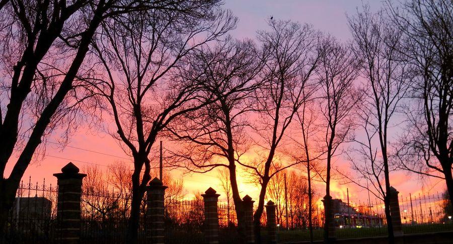 Architecture Orange Color Romantic Sky Silhouette Skyline Sunset Tranquil Scene Tranquility Tree