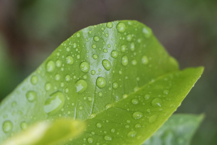 Close-up of raindrops on leaf