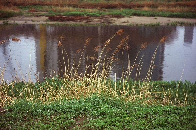 in the water Contaxiia Fujivelvia Velvia100 Color Reversal Film Film Photography Water Lake Marsh Swamp Reflection Flood Grass Plant Reed Reed - Grass Family
