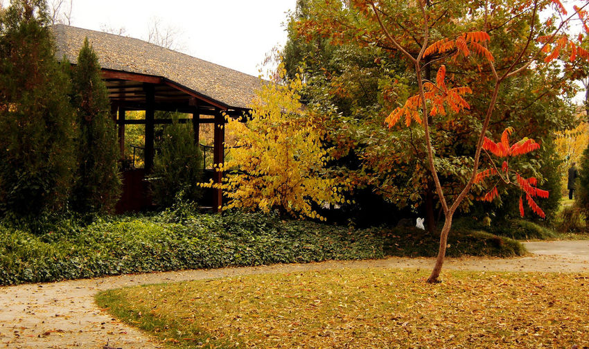 Autumn Japanese Style Colors Of Autumn Yellow