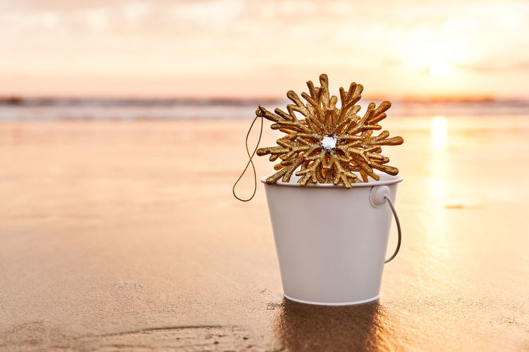 Close-up of flower on table at beach