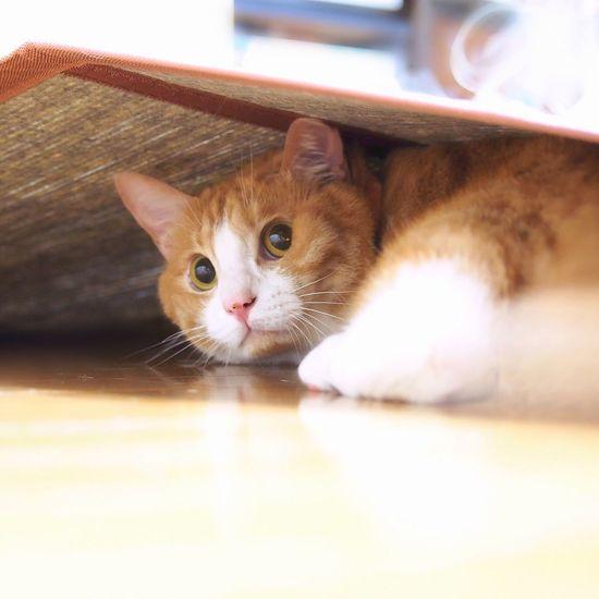 yoneyuki Cats Of EyeEm Cat Watching Cat Lovers Catsofinstagram Catoftheday Cat Photography Yoneyukithecat