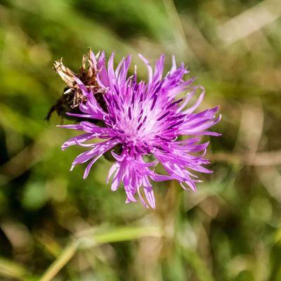 Fiore Fiori Flower Flowers flora natura nature petali viola violet fiorito fiorire