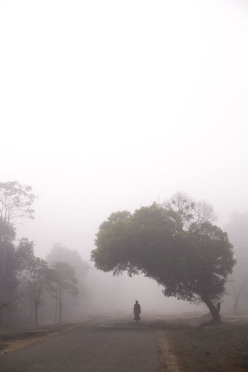 Trees on road against sky at foggy weather