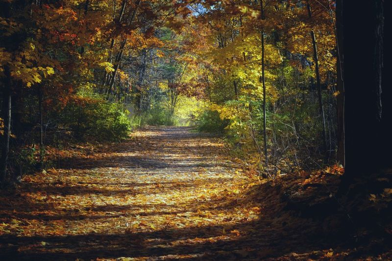 What a beautiful day it was. Leading Lines Nature Outdoors Nikon Photography Nikon D3200 Sunny Day Tree Autumn Forest Leaf Fall Leaves Pathway Narrow Woods Fallen Capture Tomorrow