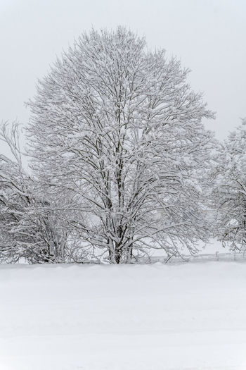 Snow covered land and trees on field during winter