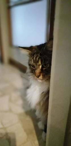 Domestic Cat Pets Domestic Animals Cat Animal Themes One Animal Feline Mammal Indoors  Window Close-up Flooring Selective Focus Zoology Curiosity Focus On Foreground Day No People Whiskers Whisker Mainecoon Maine Coon Cat Yuri Brescia, Italy Italia