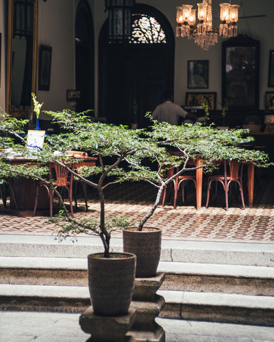 Architecture Built Structure Table Building Exterior Seat Potted Plant Chair No People Plant Empty Building Cafe Nature Arrangement Business Absence Day Outdoors Restaurant Growth Setting Flower Pot Garden Indoors  Decoration