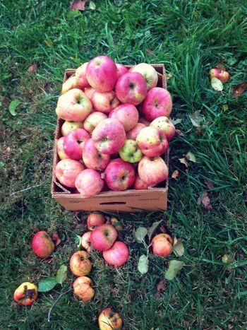 Fresh picked apples. Eat More Fruit EyeEm Nature Lover EyeEm Best Shots EyeEm Best Edits
