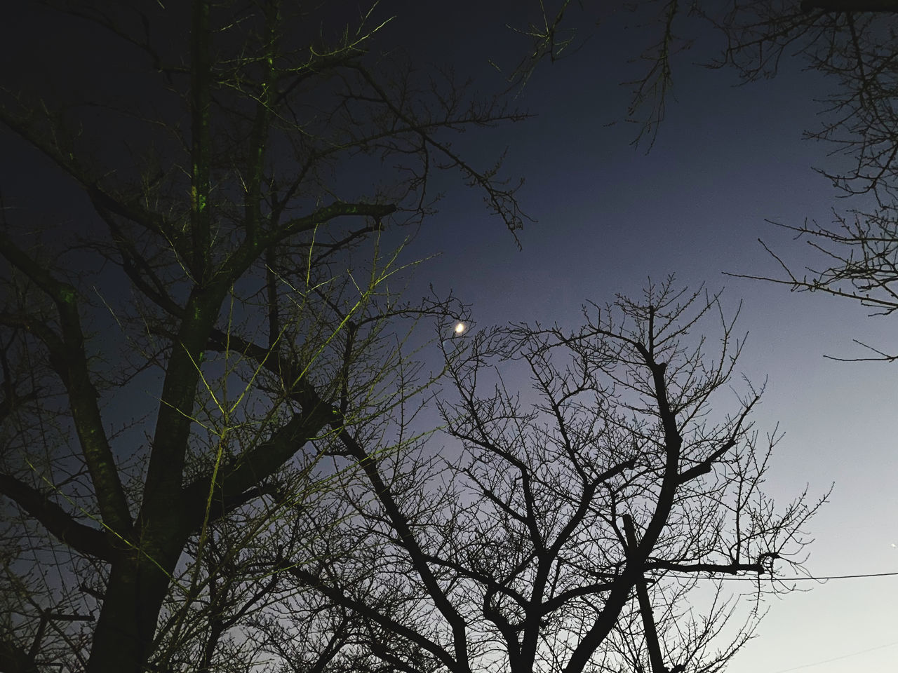 LOW ANGLE VIEW OF SILHOUETTE BARE TREE AGAINST SKY AT NIGHT