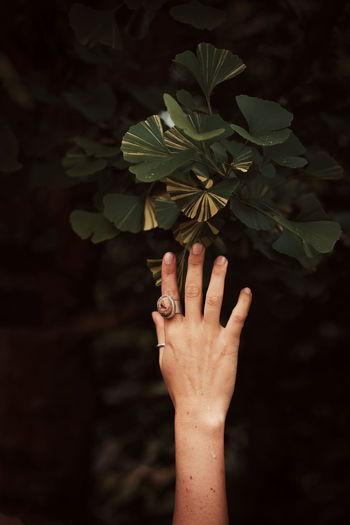 Hand touching ginko