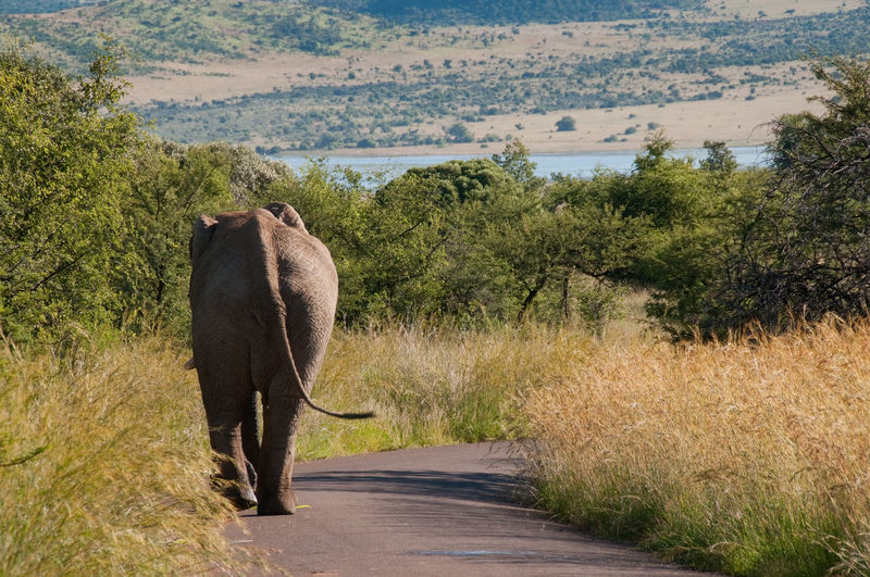 Animal Themes Animal Wildlife Animals In The Wild Day Elephant Mammal Nature No People Outdoors