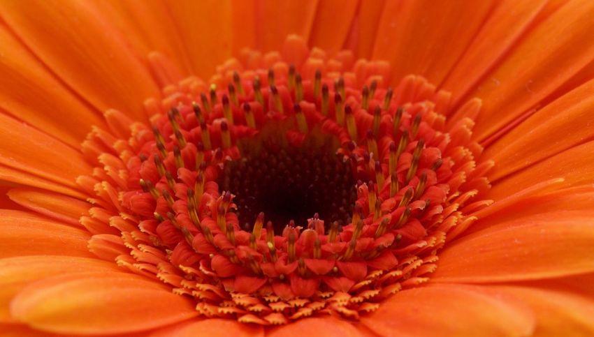 Close Up Close-up Flower Flower Head Flowerporn Flowers,Plants & Garden Fragility Freshness Macro Work No People Orange Color Petal Petals Soft Focus Yellow