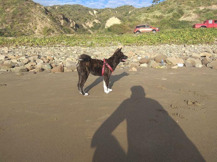 dog on the beach Pets Shadow Dog Sand Sunlight Sky The Portraitist - 2018 EyeEm Awards