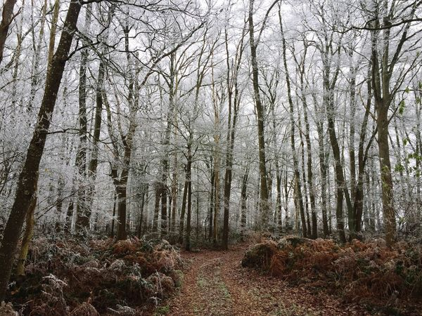 Forest Tree Nature Tranquility Beauty In Nature No People Scenics Landscape Outdoors White Woods White Color Frost Trees Magic Magical Magical Trees Mysterious Fairytale  Trail Pathway Discovery Your Ticket To Europe