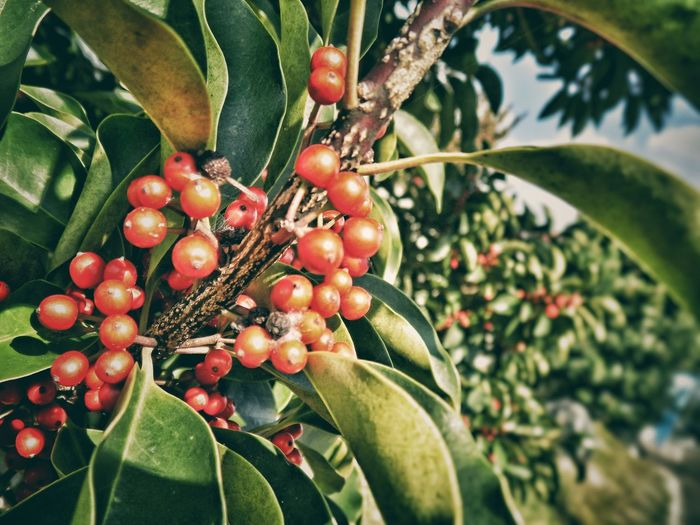 Tree Freshness