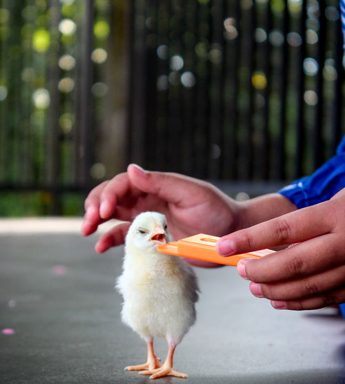 Close-up of baby hand holding bird