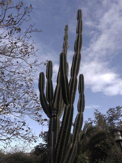 cactus Nature Ferrolterra Ferrol,galicia,spain No People Outdoors