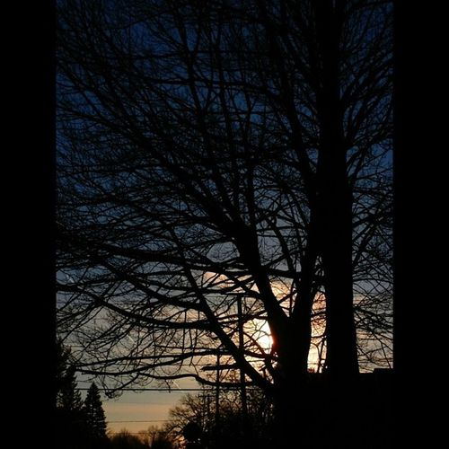 Rsa_trees Picture_to_keep Silhouette_saturdays Jj_randombranchiness