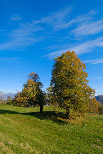 Trees on field against blue sky