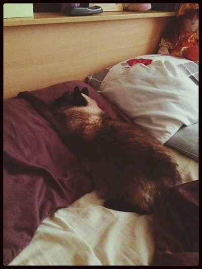Kitty Kat 3p.m. Dreems Photo