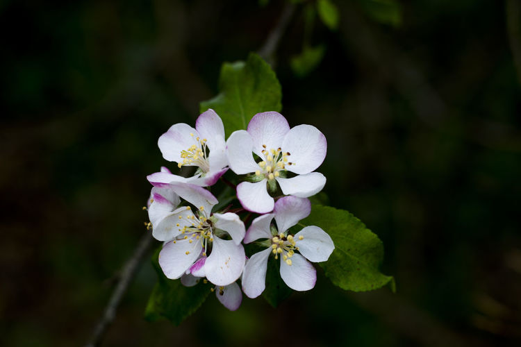 Beauty In Nature Blooming Blossom Branch Close-up Day Eyem Best Shots Eyemflowerlover Eyemphotography Flower Flower Head Focus On Foreground Fragility Freshness Growth Nature No People Outdoors Petal Pictureoftheday Pictureoftheday Popular Photos Purity Springtime Tree White Color