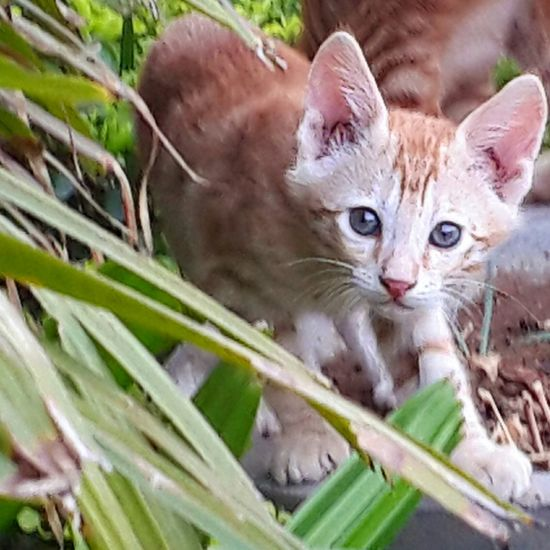 Hello World Kitten AdorableCute Cats Popular Photos Secret Garden The Cam Girl Natural
