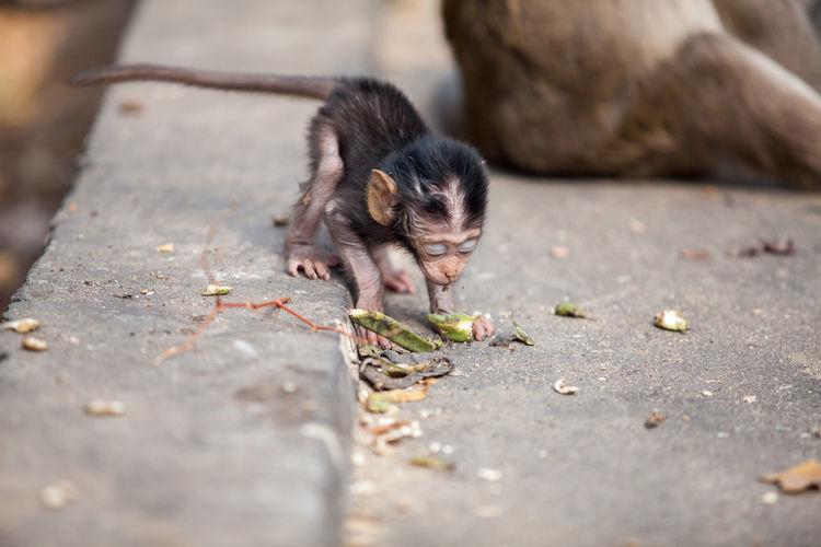 Close-Up Of Monkey Infant