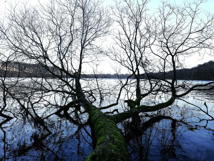 Tree in lake Denmark Danmark Lake Lake View Landscape Viborg Visitdenmark Nature Nature_collection Nature Photography Naturelovers Cold Temperature Cold Moss Tree Tree Trunk Lake Lakeside Lakeshore Water Calm Tree Branch Backgrounds Silhouette Sky Green Color Dead Tree Bare Tree Dead Plant