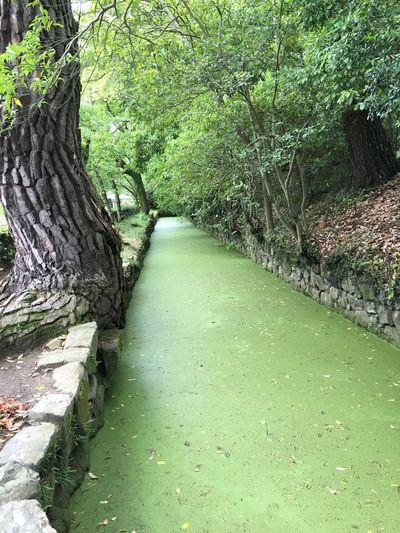 栗林公園 First Eyeem Photo